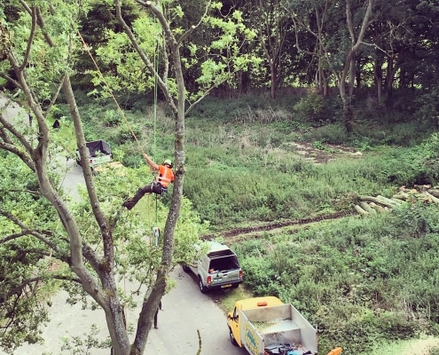 Commercial Tree Work